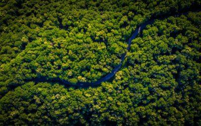 Harmonie durch die Weisheit der Natur
